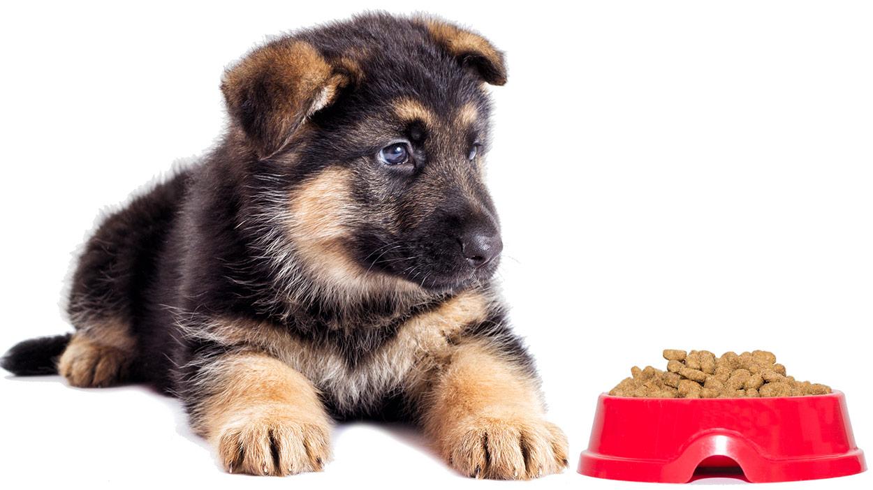 Royal Canin 174 German Shepherd Puppy Dry Dog Food