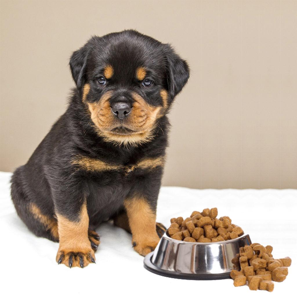 rottweiler dog food - HD1024×1024